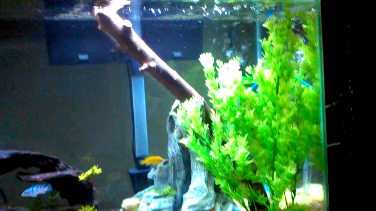 55 gallon freshwater aquarium fish tank youtube for Youtube fish tank