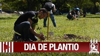 Plantio de mudas dá início ao Bosque do Pau-Brasil na UFPE