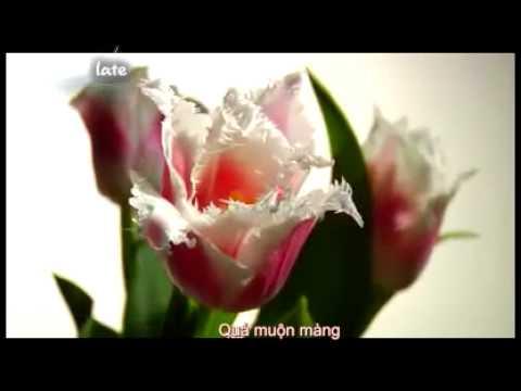 Học tiếng anh qua video bài hát tiếng Anh có phụ đề Anh Việt 7