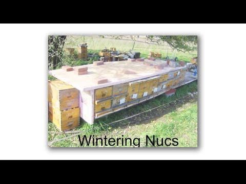Michael Bush, Wintering Nucs