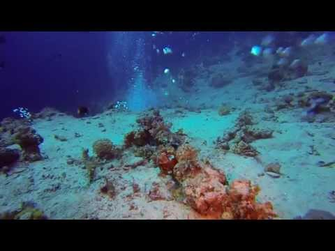Best of Diving in Dahab 2013-2014 | Our oceans need help! | GoPro 3 HD
