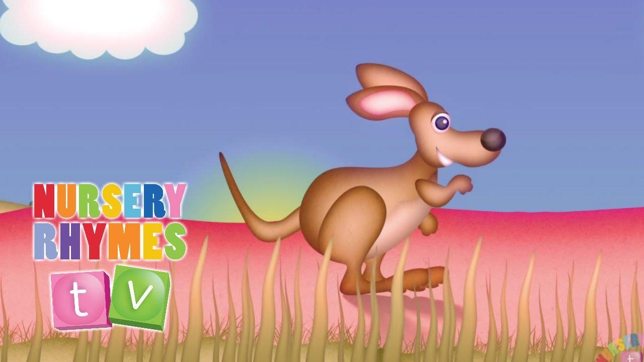 Y So Kangaroo Song THE KANGAROO SONG | Nu...
