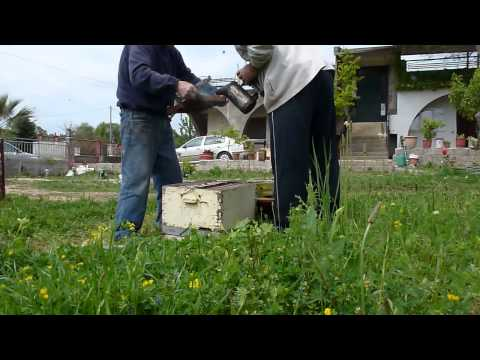 μελισσοκομια Βρεττός