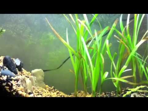 How to grow aquarium plants for beginners youtube for Best fish tanks for beginners