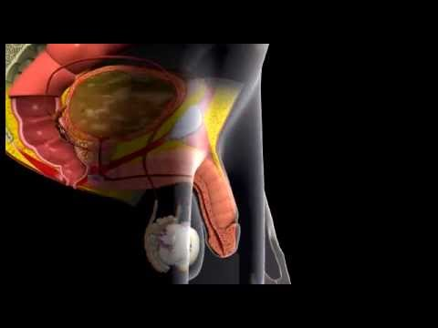 Viagra mechanism animation