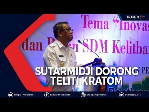 Sutarmidji Dorong Litbang Kalbar Teliti Kratom