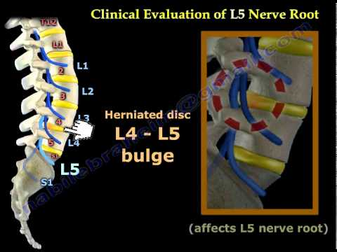 Neurological Examination Spinal Cord Part 2 - Everything You Need To Know - Dr. Nabil Ebraheim