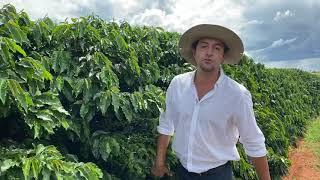 Felipe Santinato, desempenho no cerrado da variedade de café IPR 100 com resistência a nematoides