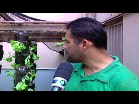 Horta hidropônica caseira é feita com garrafas