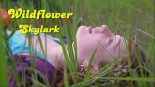 Wildflower – Skylark