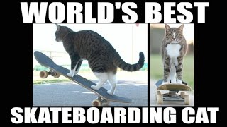 Didga the Cat Skateboards Better Than You Do