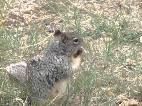 Squirrel at Grand Canyon, Arizona