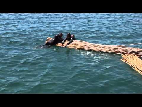 Gaubeja en mar