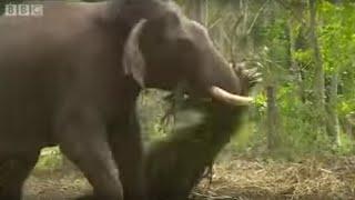 Elephants Hold Grudges?   Ultimate Killers   BBC