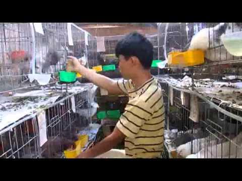 Bo cau Phap VN1