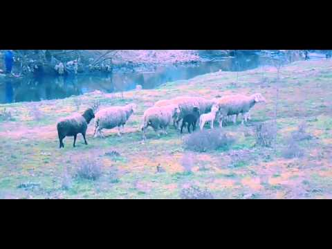 Qingji i Vogel  (Official Video).  2014