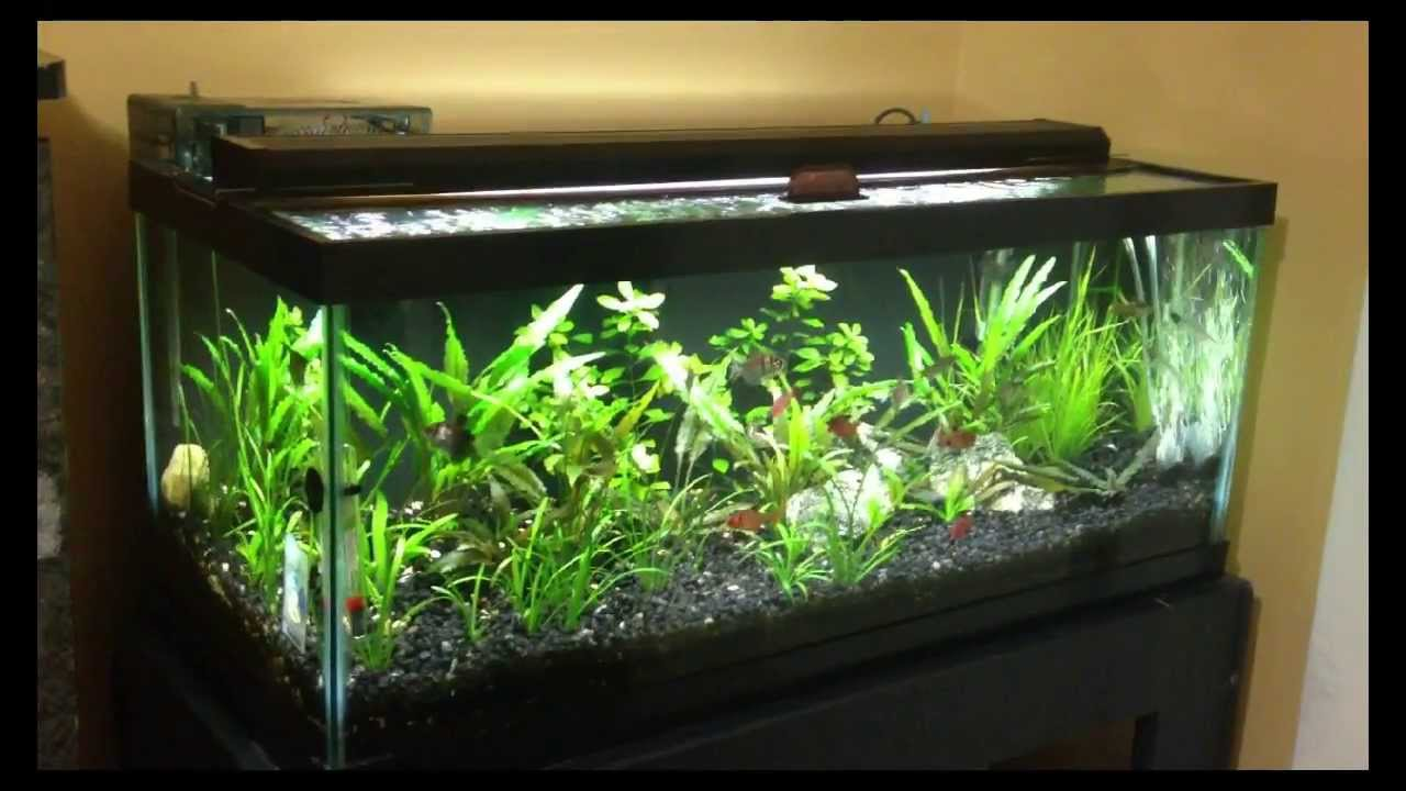 20 gallon long planted tank one year after youtube for Youtube fish tank
