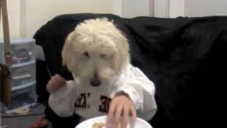 Perro comiendo en la mesa