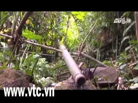 Phóng sự truyền hình đặc biệt cuộc sống cha con người rừng