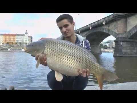 Carp team Exil - Urban fishing in Prague 2014