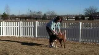 Dog Training How To Stop Jumping Up