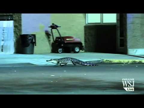 Gator Boys' spoiler alert: Aug. 18 episode finds J-Mart and other