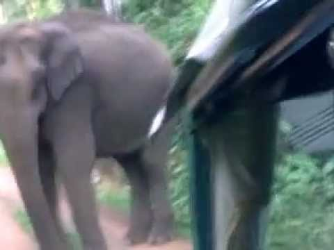 Kerala elephant attack youtube - photo#12