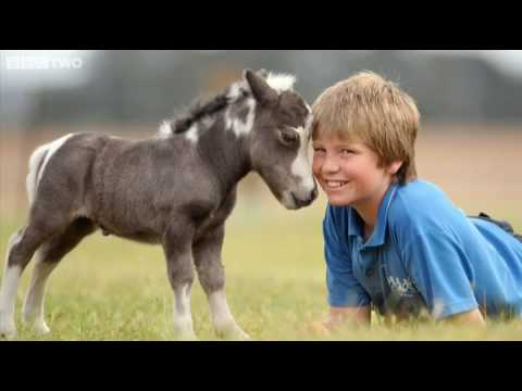 World's Smallest Horse - Graham Norton Show - BBC Two - YouTube