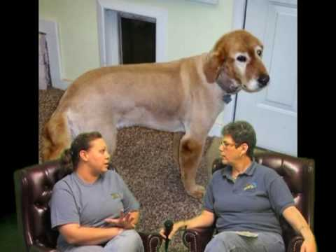 Villa La PAWS Grooming - Michela, Different Popular Cuts