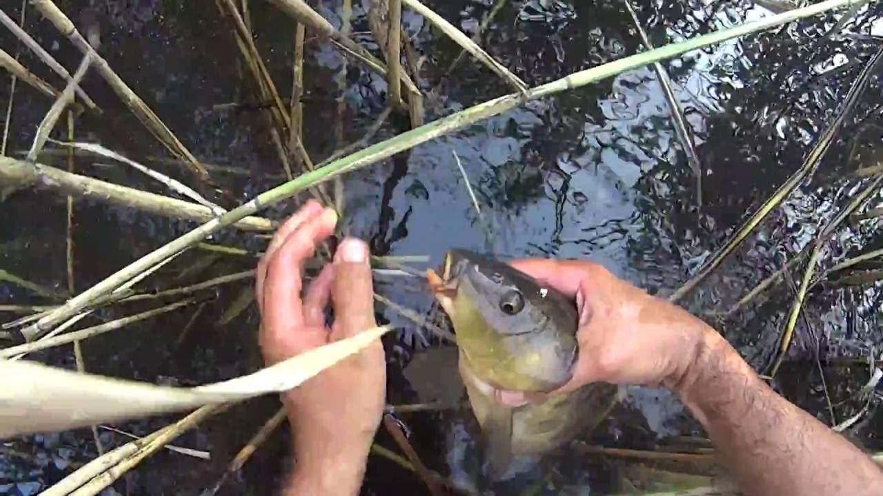 рыбалка в августе что ловится