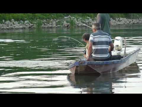 Upecan veliki som u Savi kod Slavonskog Broda [Big catfish caught in Sava in Slavonski Brod]