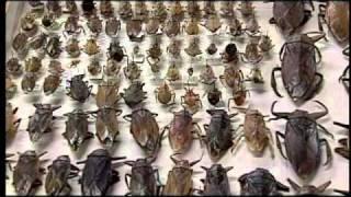 Cooking | nuestra unam insectos comestibles | nuestra unam insectos comestibles