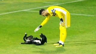 Momentos divertidos con animales en el fútbol