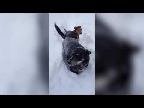 Funny Snow Dog | Very Cute Dog Videos