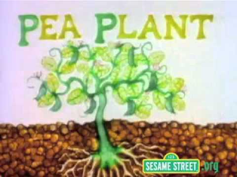 Sesame Street Letter P