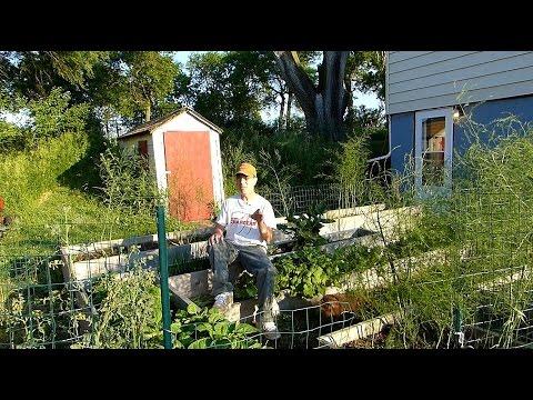 Successful No water Gardening!