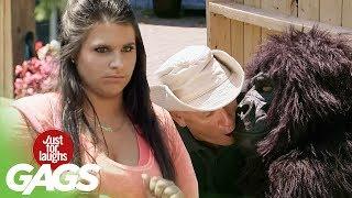Ošetrovateľ a gorila - skrytá kamera