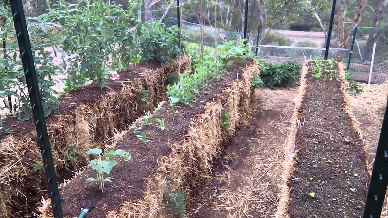 Raised Garden Bed Hay