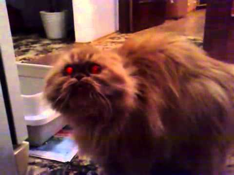 Possessed Demon Cat