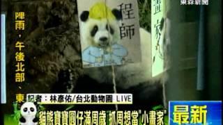 [東森新聞]最新》貓熊寶寶圓仔滿周歲 抓周想當「小畫家」