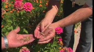 How To Collect Seed From Your Garden