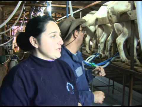 Criação de cabras leiteiras - Programa Rio Grande Rural