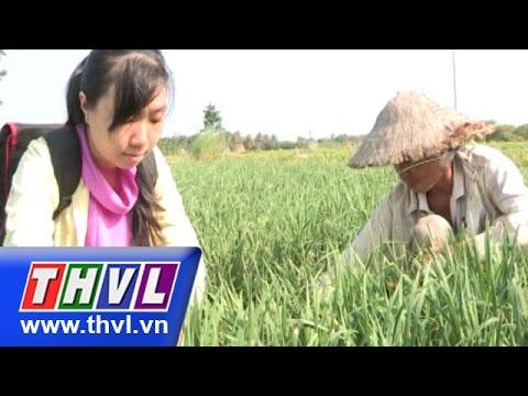 THVL | Chuyện hôm nay: An toàn - vệ sinh thực phẩm thực trạng và giải pháp (12/11/2015)