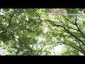 調布の魅力再発見!「調布市野草園・深大寺自然広場」