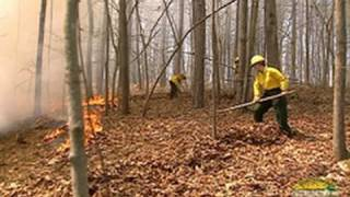 Using Hand Tools To Suppress TN Forest Fires