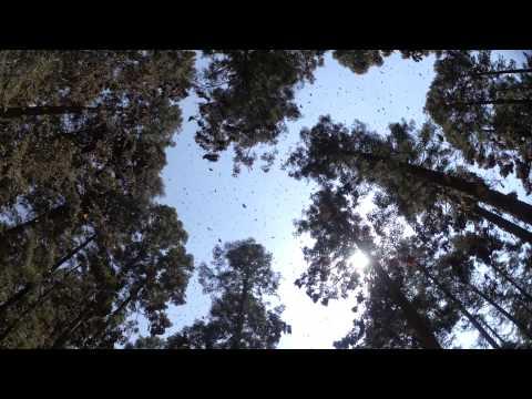 Flight Of The Butterflies in IMAX 3D