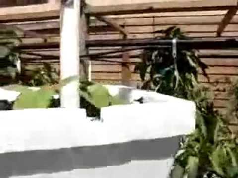Hidroponia Vertical com Garrafa Pet_6