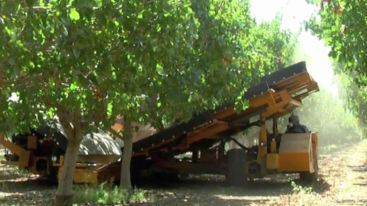 2010 Pistachio Harvest Youtube
