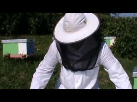 2/3 Inmultirea albinelor - Volumul 3 al Scolii de Apicultura va fi dedicat in mare acestui subiect