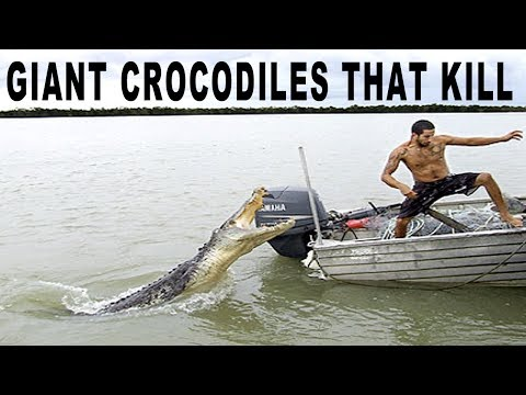 KILLER CROCODILES